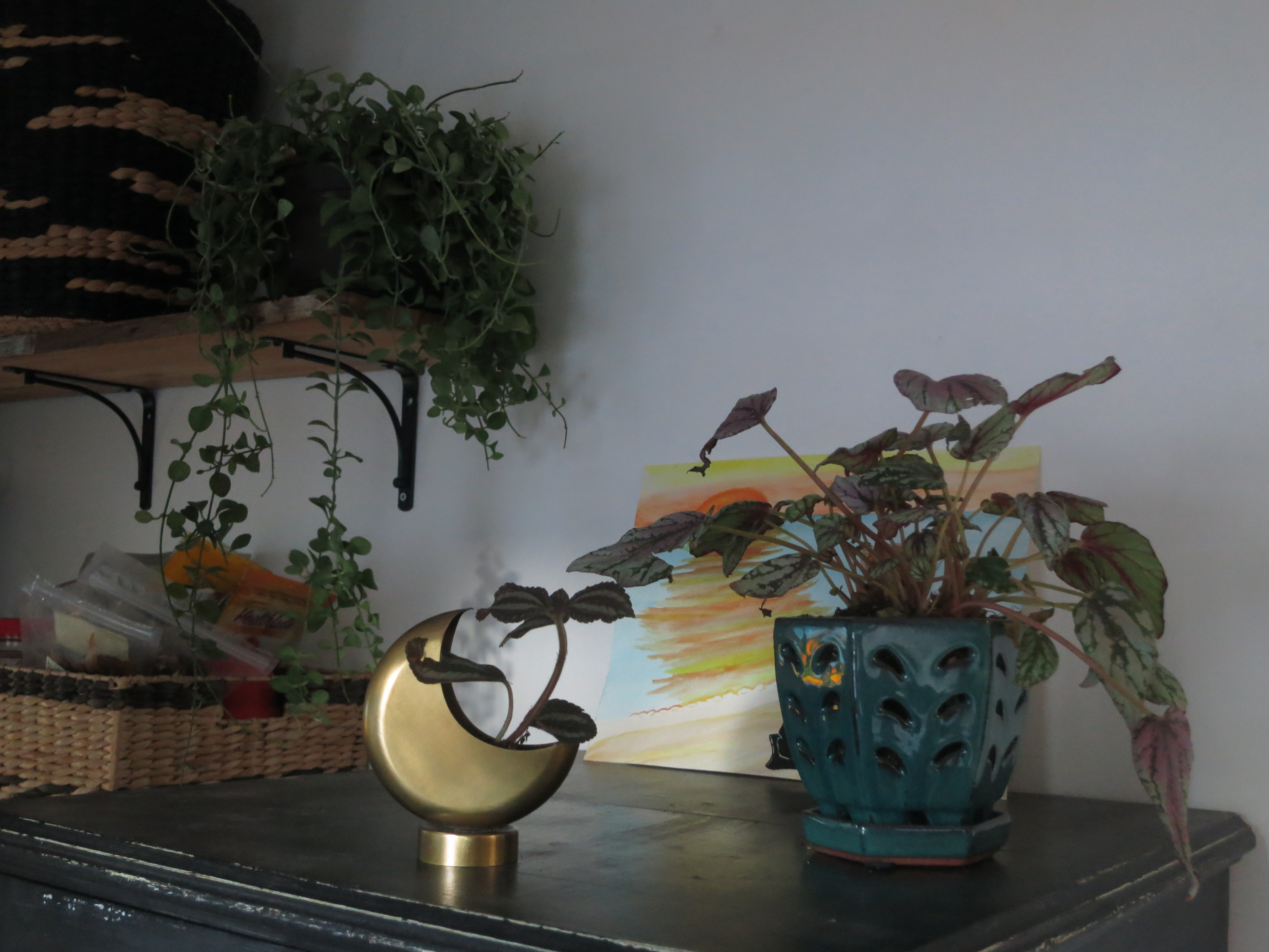 mud-room-plant-details